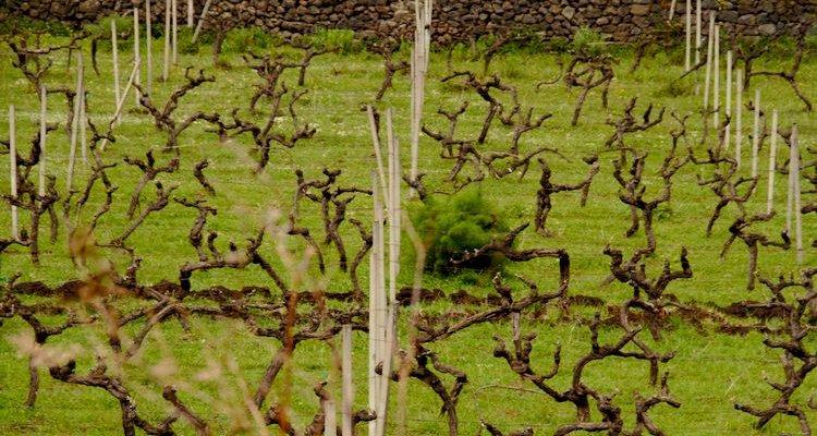 Girolamo Russo - San Lorenzo Contrada vineyards (Photo Simon Woolf)