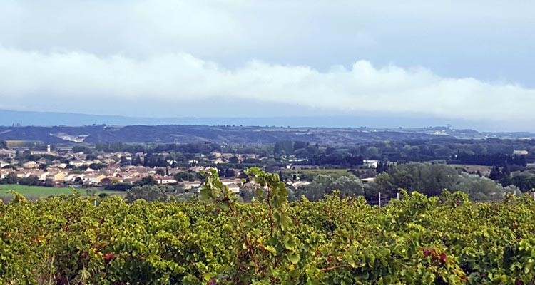 The Good Wines of Lirac  24d8588f89