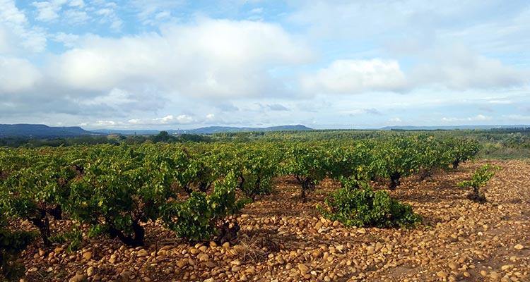 The vineyards of Château de Montfaucon