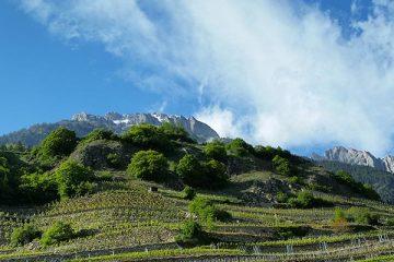 PALATE PRESS – The Online Wine Magazine